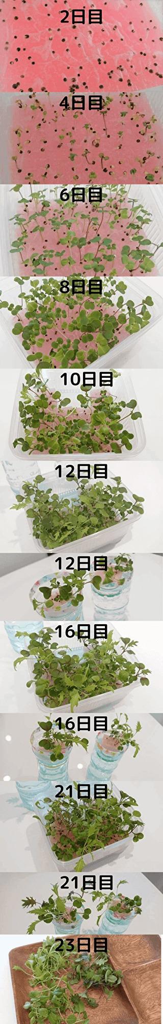 水耕栽培 1ヶ月分のブログ写真で振り返ります
