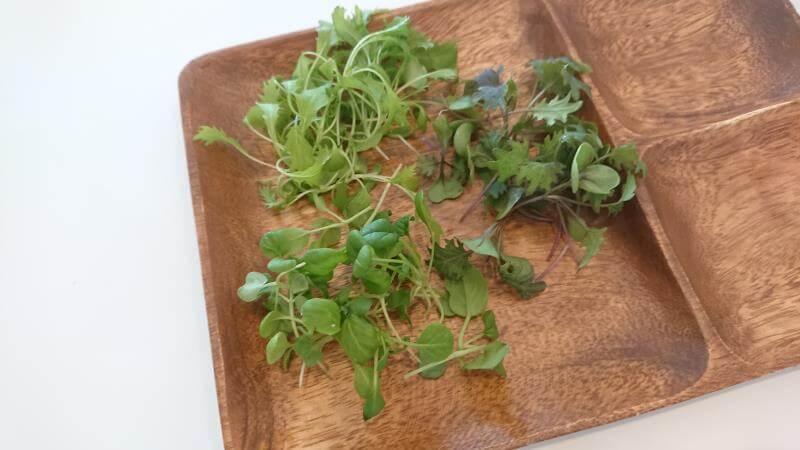 水耕栽培の収穫 ①水菜②ケール③ターサイ
